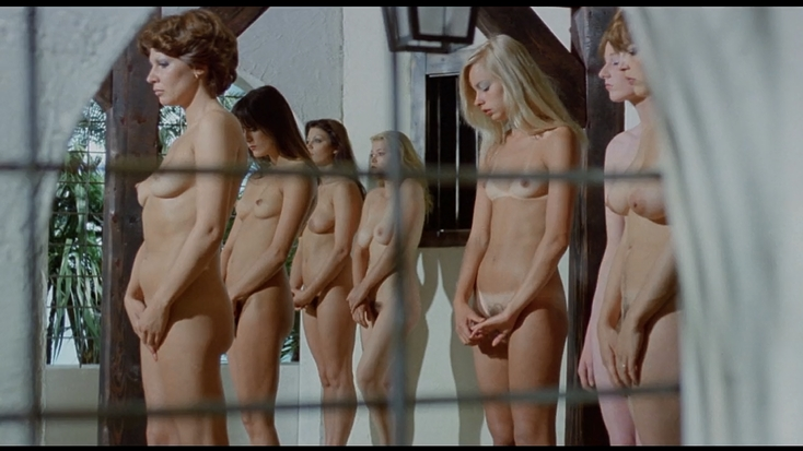 lined up naked babes