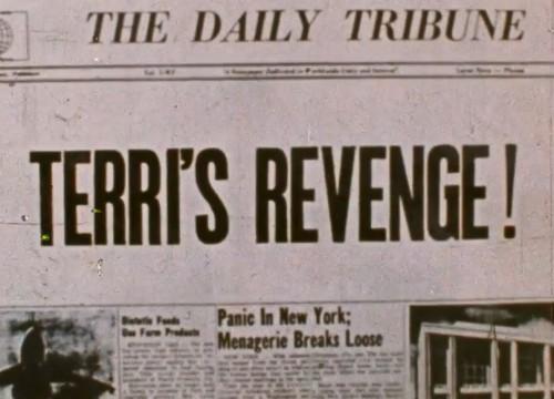 Terri's Revenge (1975) cover